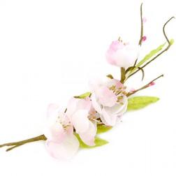 Ramoscelli primaverili fiori di pesco