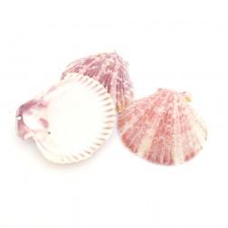 Conchiglie marine decorazione - Pack da 20pz